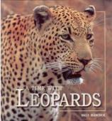 A Time with Leopards - Dale Hancock